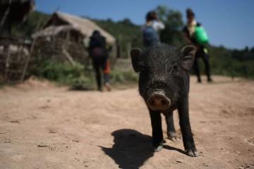 Exploring Remote Ethnic Lands