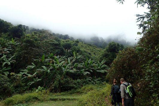 Nam Oun, Wilderness, Trail, Jungle, Northern Laos, Luang Namtha, Evergreen Forest, Adventure